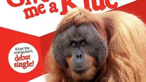 Ezt is megértük: saját kislemezt adott ki a szumátrai orangután