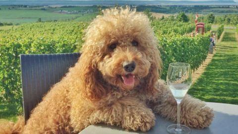 A vidám nyaraló kutyánál aranyosabb ma már nem lesz