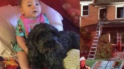 8 hónapos babát mentett meg a tűztől a hős kutya