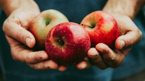 Kevés és drága idén a jó magyar alma