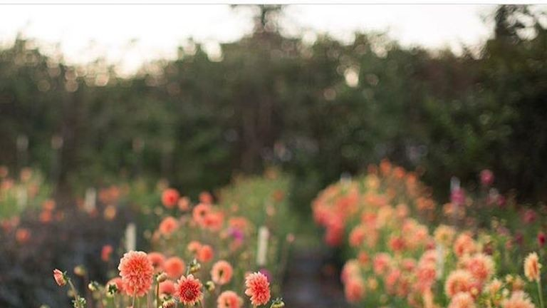 Ilyen életről álmodtál egész életedben - csodás képek egy virágkötő Instagramjáról