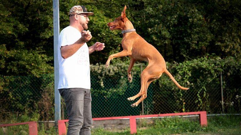 Tükör módszer: egy különleges iskola kutyáknak és gazdiknak