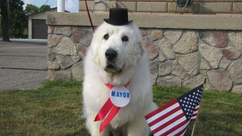 Harmadszor lesz kutya a város vezetője
