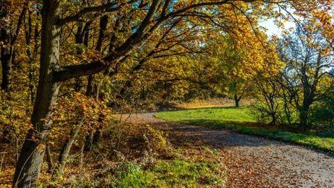 Íme a legszebb Budapest környéki kirándulóhely ősszel, ahová a gyerekeket is elviheted