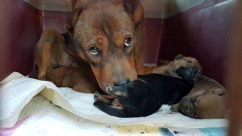 Ezt a videót megkönnyezed – csatornába szorult csöppnyi kutyusokat mentettek