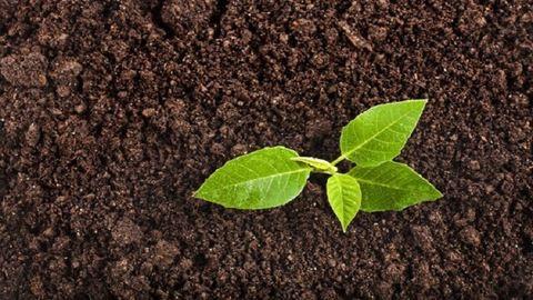8 szuperhatékony, költségkímélő DIY-tipp a kertbe