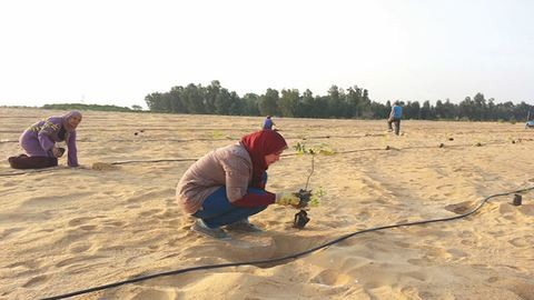 Természet és tudomány: egy új módszerrel erdő települhet a sivatag közepére is