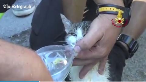 6 nap után élve találtak egy cicát az olaszországi földrengés romjai között