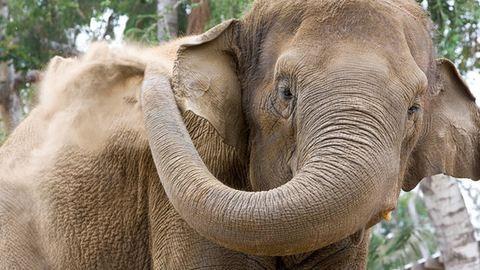 Hatalmas a baj: lassan elfogynak az elefántok Afrikából