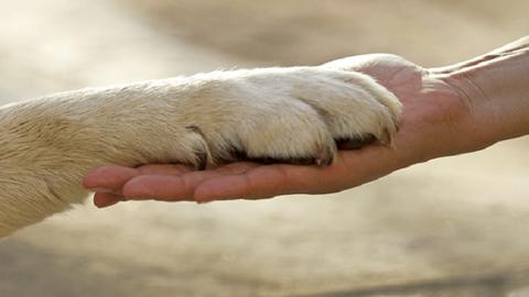 10 lecke, amit a kutyák tanítanak nekünk az életről