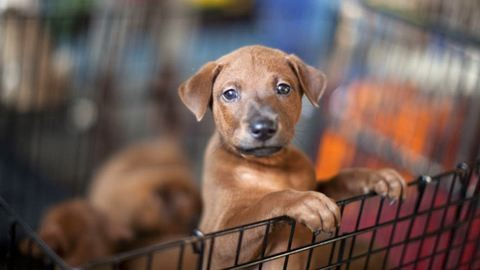 Kutyák segítségével tesztel a Nébih
