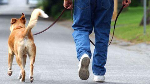Gigabírságot kaphatnak a kutyatartók