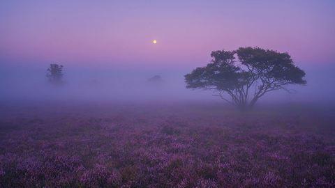 Csodálatos útifotók: Hollandia lila ködben