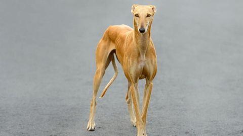 Kutyák halálát okozó kísérlet miatt támadják a kutatókat