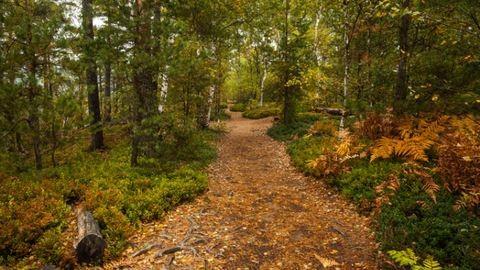 Hazánk felé közelít az erdők rettegett ellensége