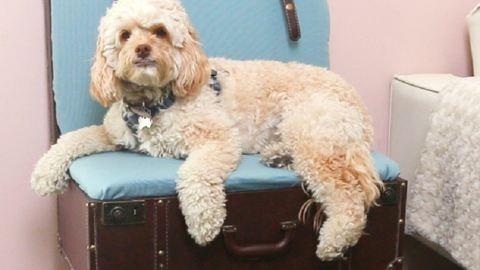 Van egy antik bőröndöd? Alakítsd menő ülőkévé, amit a kutyád is imádni fog