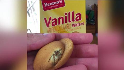 Kellemetlen percek: pókot sütöttek a kekszbe