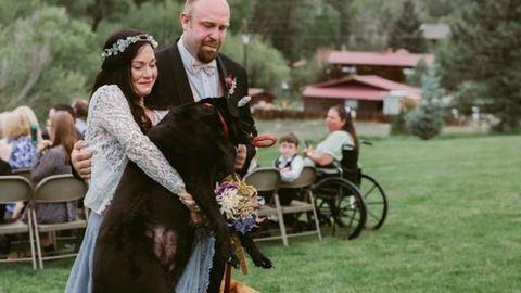 A világért sem hagyta volna ki gazdija esküvőjét a haldokló kutya