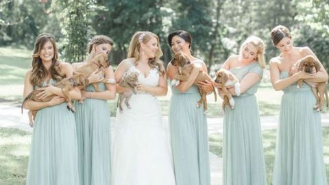 Kiskutyákra cserélték a virágokat az esküvői fotózáson