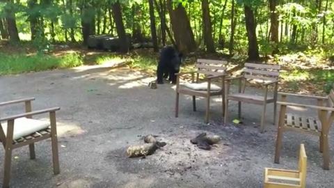 Így ne viselkedj egy medvével – videó