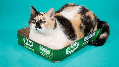 Helló hétfő: duci macskák minden mennyiségben