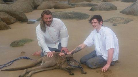 Séfek mentették ki az óceánból a didergő kengurut