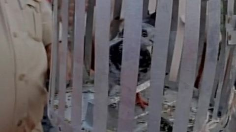 Újabban galambokat vesznek őrizetbe Indiában