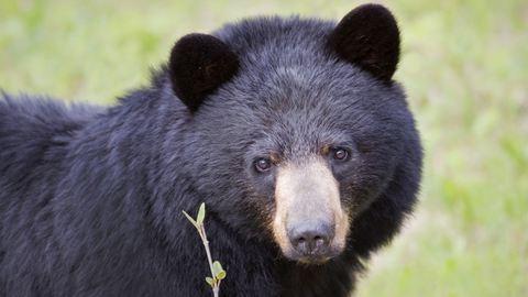 Medvével futott össze két nógrádi kocogó