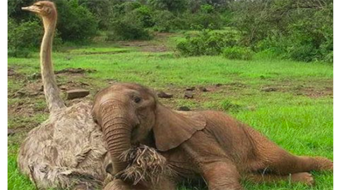 Struccal bújik össze a kiselefánt – cuki fotók