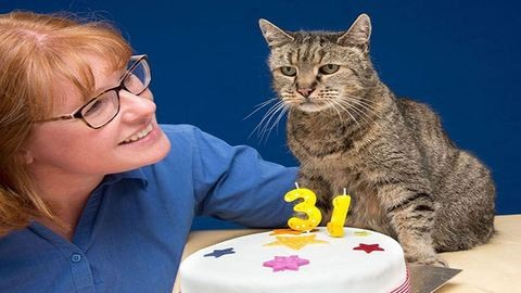 31 éves lett a világ legöregebb cicája