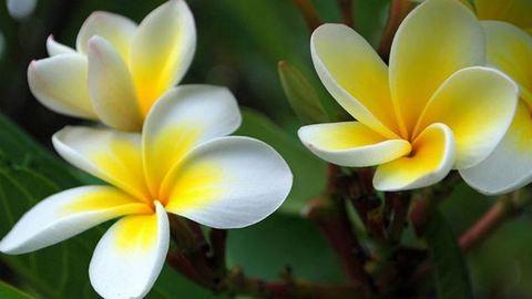 Kvíz: Felismered ezeket a virágokat?