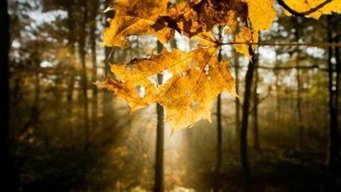 Időjárás: többórás napsütés a hét utolsó napján