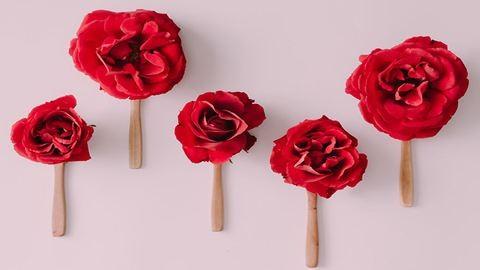 Mesés minimalista művészet csodaszép növényekből – fotók