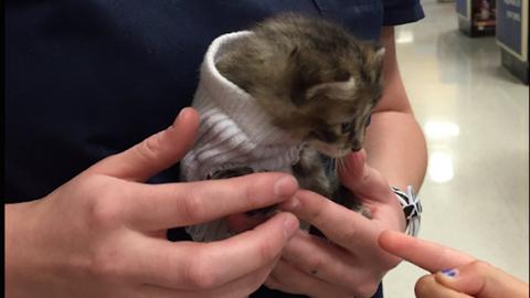 Az egész internet imádja a zokniba bújtatott mentett cicust