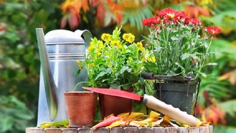 5 hasznos kertészkedési tipp az őszre