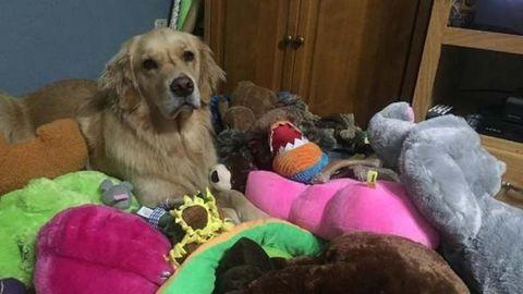 Minden este más játékot talál magának a kutya – cuki fotók