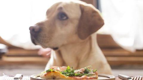 Ezeket az ételeket nyugodtan megoszthatod a kutyusoddal