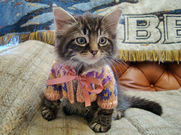 Semmi, de tényleg semmi nem lehet aranyosabb a pulóveres kisállatoknál