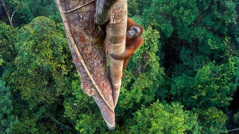 12 csodálatos felvétel a Londoni Természettudományi Múzeum fotópályázatából