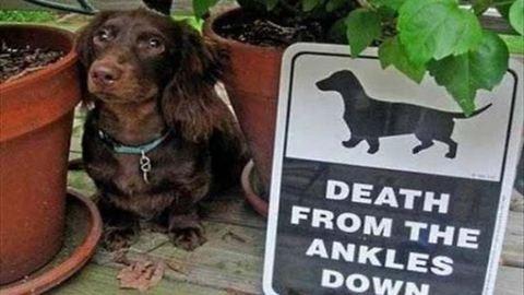 """Ezektől a """"harapós"""" kutyáktól biztosan nem kell félned"""