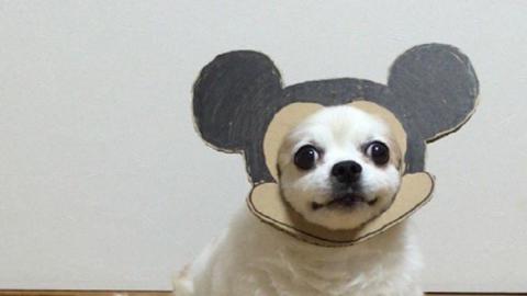 Rossz napod van? Ez a vicces japán kutya majd segít rajtad!