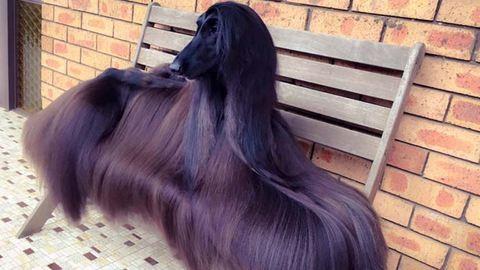 Szerinted is ő a világ legelegánsabb kutyája?
