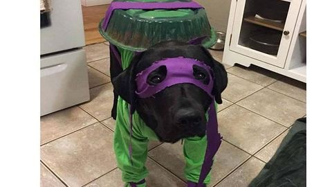 Ennek a kutyának jobb jelmeze van, mint bárkinek! – fotó