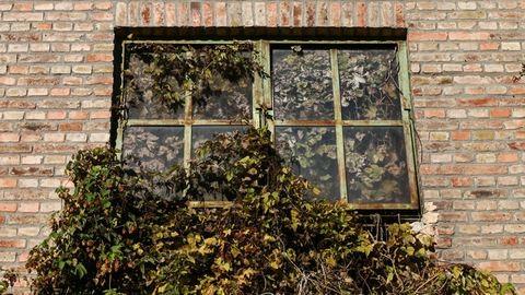 Így vette vissza az uralmat a természet a legendás váci Forte filmgyárban