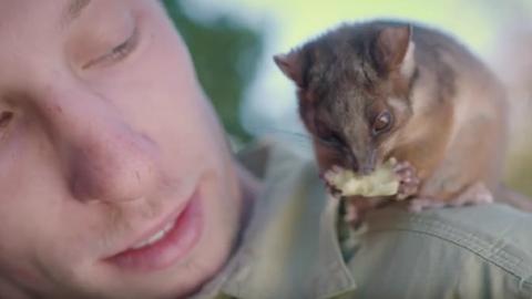Így spanol gondozójával az árva oposszumkölyök  – videó