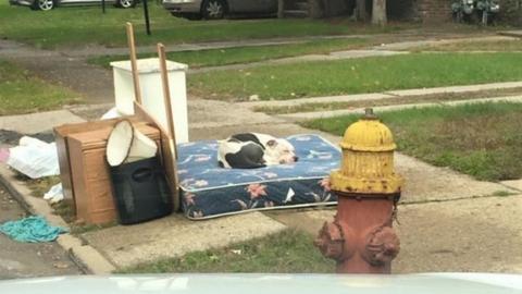 Egy hónapig várt gazdáira régi házuk előtt a hűséges kutya