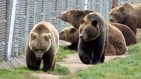 Bemutatjuk az ország egyetlen medveotthonát