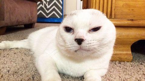 Befogadta a fül nélküli macskát, most a cicának köszönheti az életét