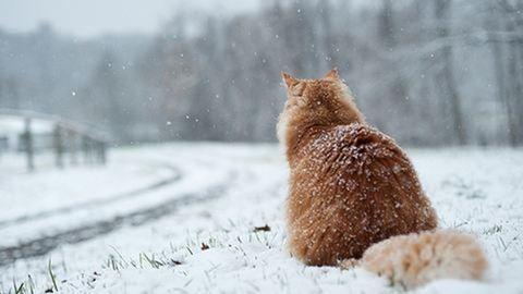 Elő a hólapátokkal, berobban a tél a hétvégén