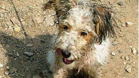 Mentett kutyájának köszönheti, hogy évek után újra lábra tudott állni